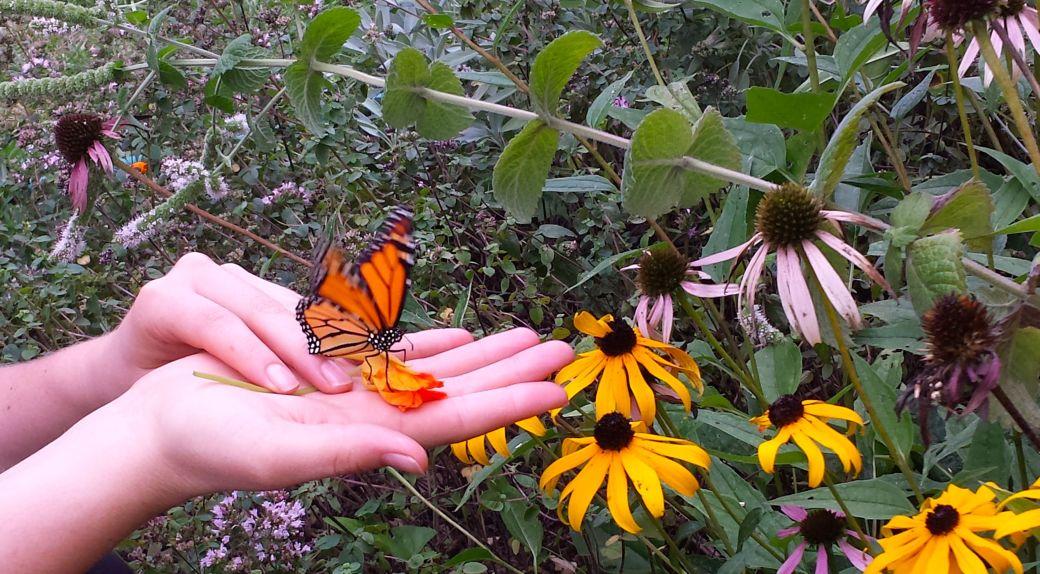 Butterfly Release3