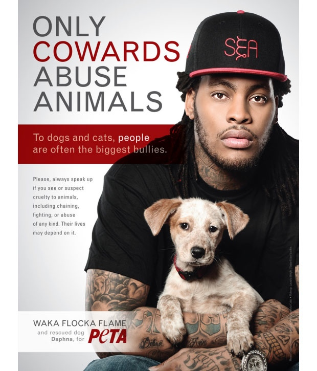 persuasive animals peeta Animal cruelty- persuasive essay every day in the australia animals are beaten, neglected, or forced to struggle for survival left in unsanitary conditions with no .