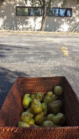 foraged-pears-2